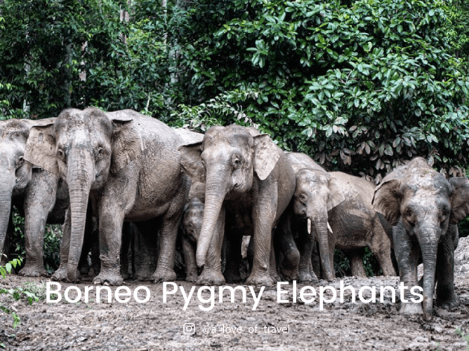 8 Endangered Animals in Malaysia