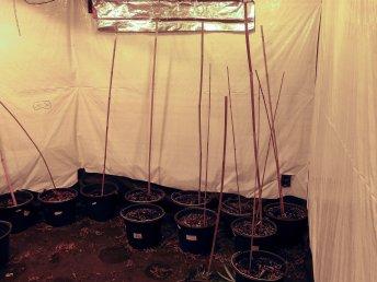 Diese Cannabisplantage wurde in Iserlohn-Oestrich gefunden. Foto: Polizei Märkischer Kreis