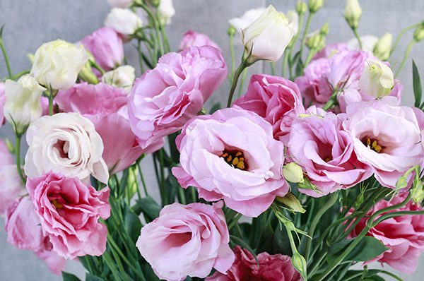 Mothers Day Lisianthus