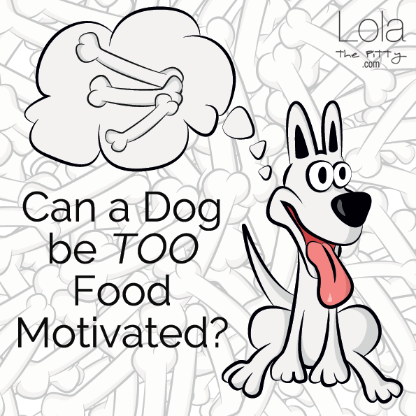 Can a dog be too food motivated?!