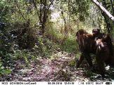IMAG0021 - Olive baboons