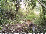 IMAG0125 - Vervet monkey