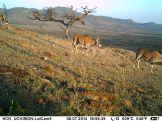 IMAG1505- Beisa oryx