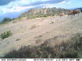 IMAG1690 - Eland herd