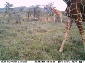 IMAG2811 - Giraffes