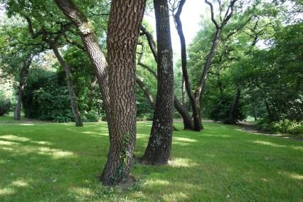 Bois de Boulogne II