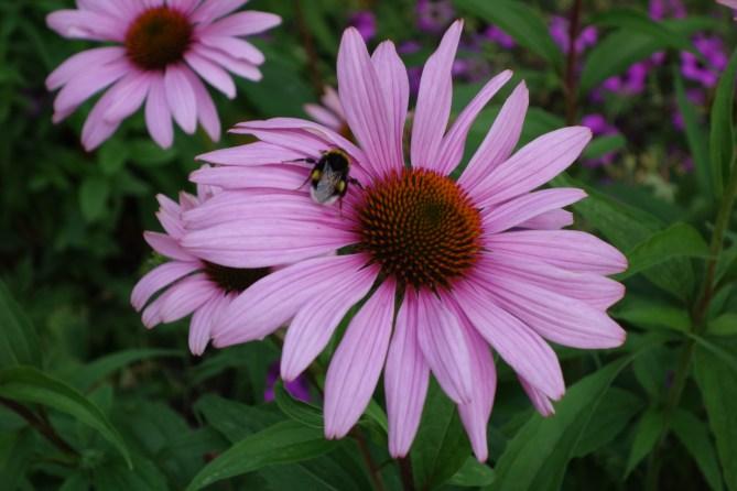 Bumblebee - 2014-07-20