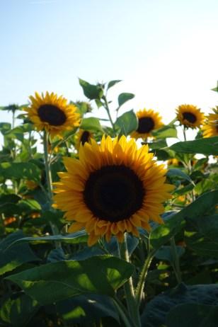 Sunny I