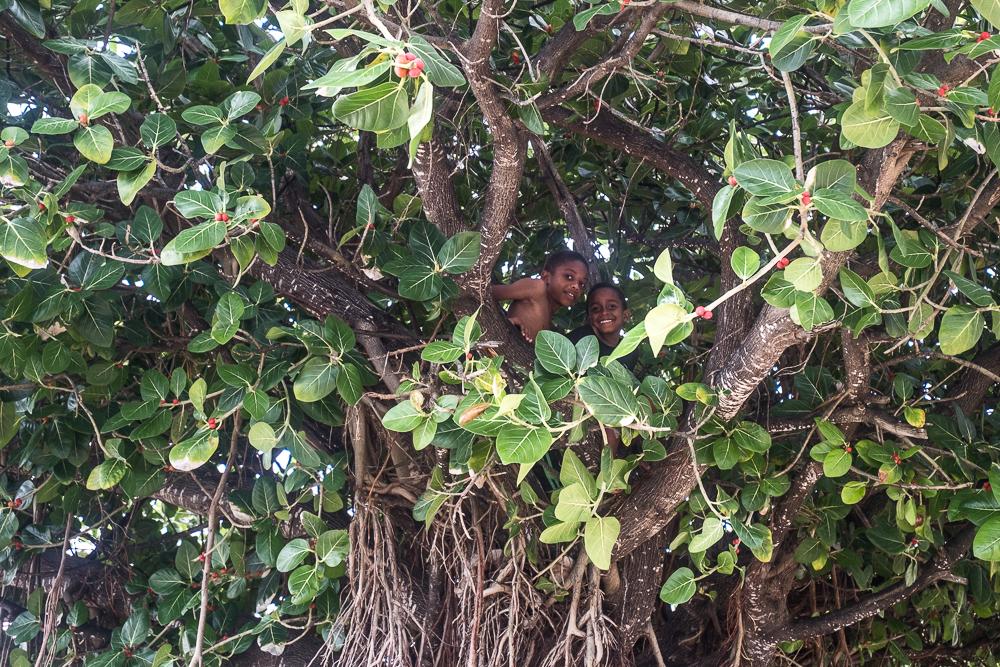 Rodrigues - Garçons grimpés dans l'affouche