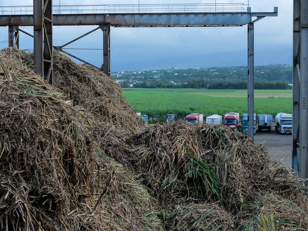 Déchargement de la canne à sucre - Usine de Bois Rouge