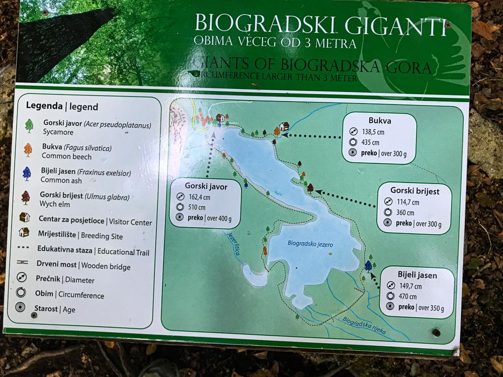Indication sur la flore du parc, à savoir que le parc abrite une des dernières fôrets primaires d'Europe.