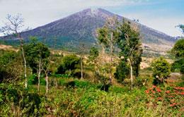 Senaru Landscape
