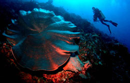 Coral Reefs Togean in Sulawesi