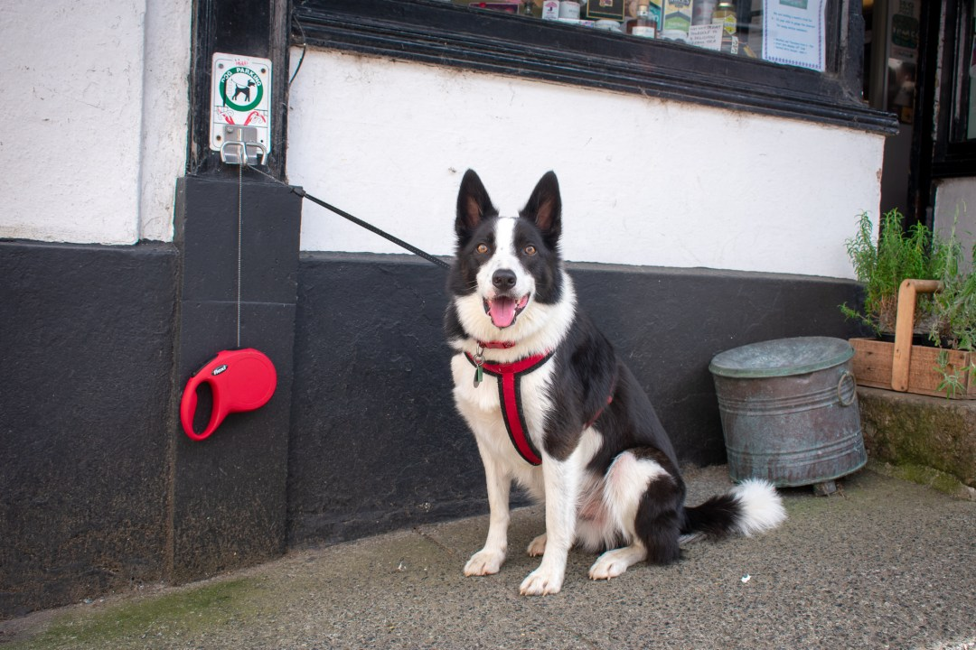 Dog Friendly Days Out in Devon Chagford Dog Parking