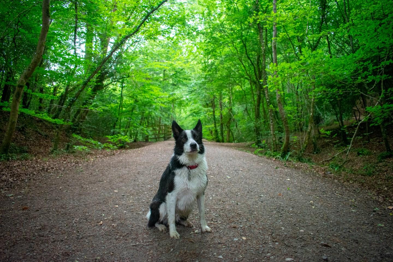 Dog Friendly Days Out in Devon Parke National Trust