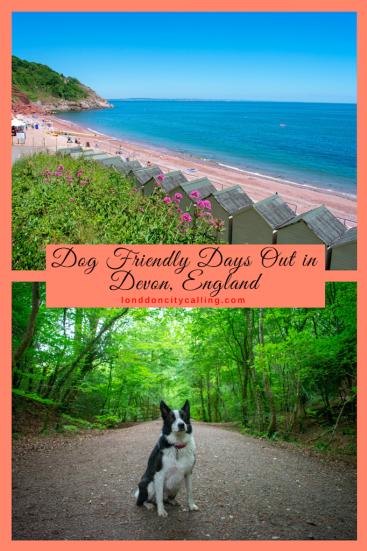 Dog Friendly Days Out in Devon