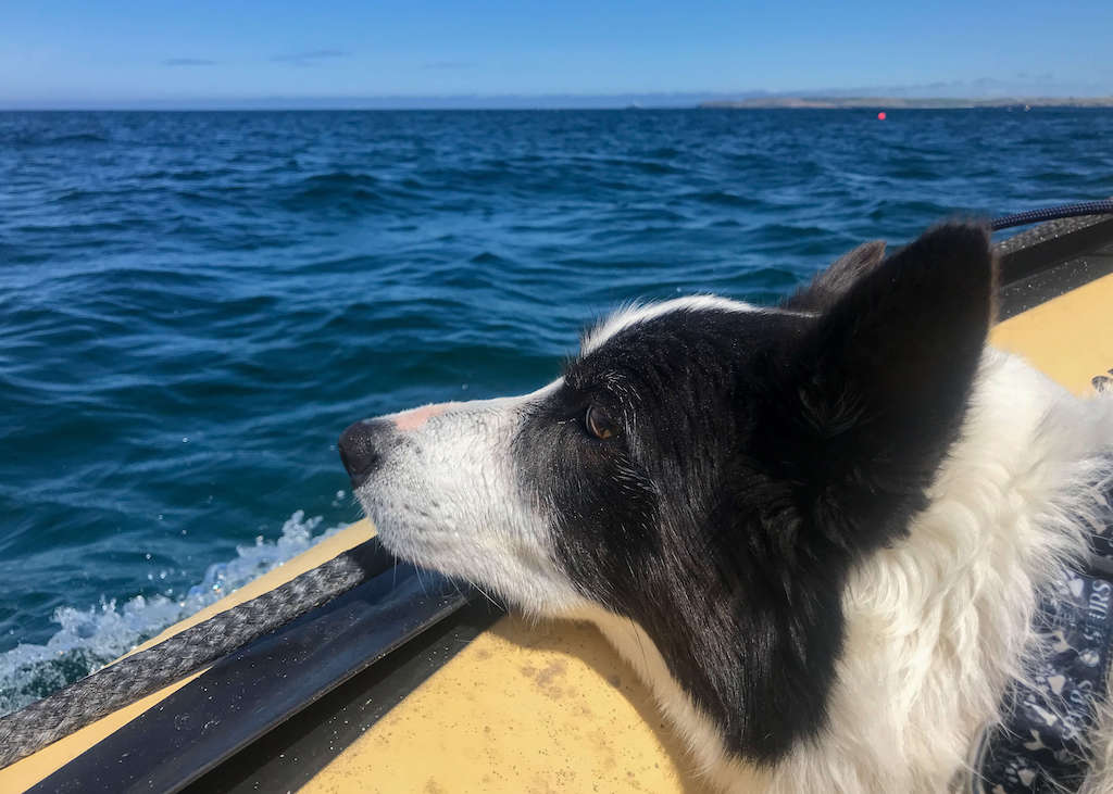 Dog on a boat, dog friendly activities Conrwall
