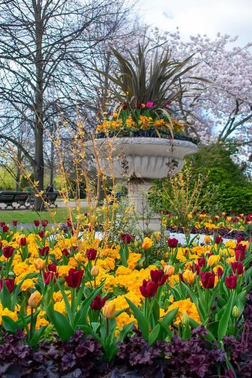 Flowers in Regents Park London