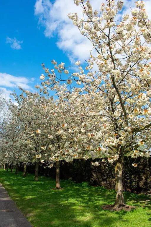 Regents Park London in Spring
