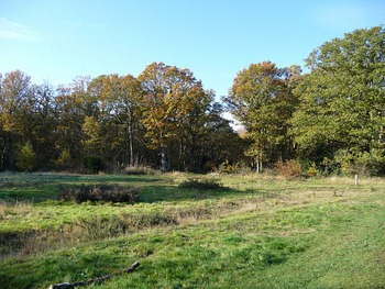 Hainault forest county park is good for mountain biking if you are in London