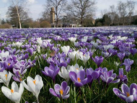 Kew Gardens in Spring