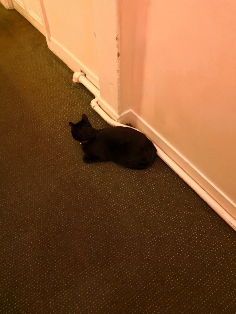 hotel Chopin, hotel's cat