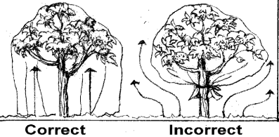diagram right and wrong