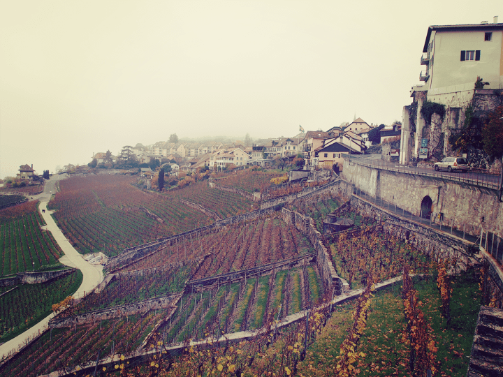 Switzerland_lavaux_vineyard_1