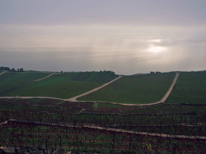 Switzerland_lavaux_vineyard_3
