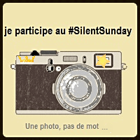 Silentsunday 1