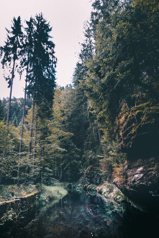 bos in Tsjechie
