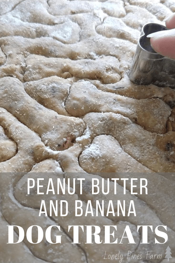 You eat healthily, so your dog should too! Here's our recipe for all-natural peanut butter and banana dog treats. They're his absolute favorite.