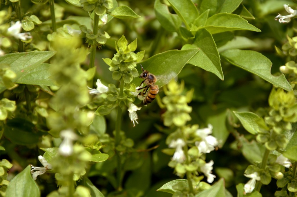 You may not realize this, but pollinators play a huge part in the success of your garden. So when you're choosing your plants & designing your layout, make sure you also plan for pollinators.