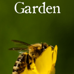 You may not realize this, but pollinators - like bees, butterflies, and hummingbirds - play a huge part in the success of your garden. So when you're choosing your plants & designing your layout, make sure you also plan for pollinators.