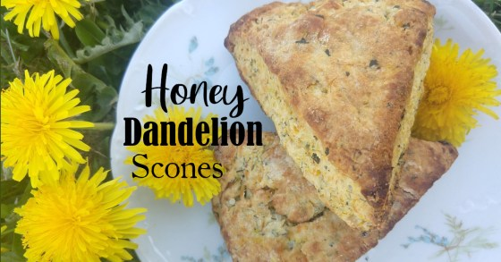 Dandelion Cream Scones