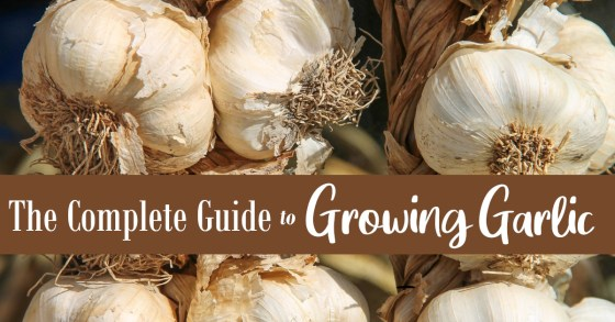How to Grow Garlic: The Complete Guide