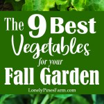 A large part of self sustainably is living off the land. In our mild PNW climate, that means working hard to garden year-round. When late summer hits, it's officially time to start planting your fall garden. Here are our top vegetables to plant in August & September for a bountiful fall harvest. Many of these plants are perfect for beginner gardeners.