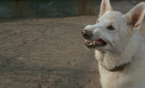 800-white-dog-fullerpdvd_018.jpg