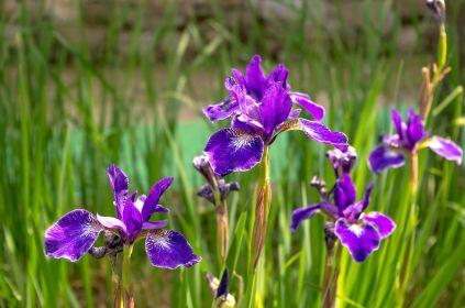 Giardino dell'Iris, Firenze