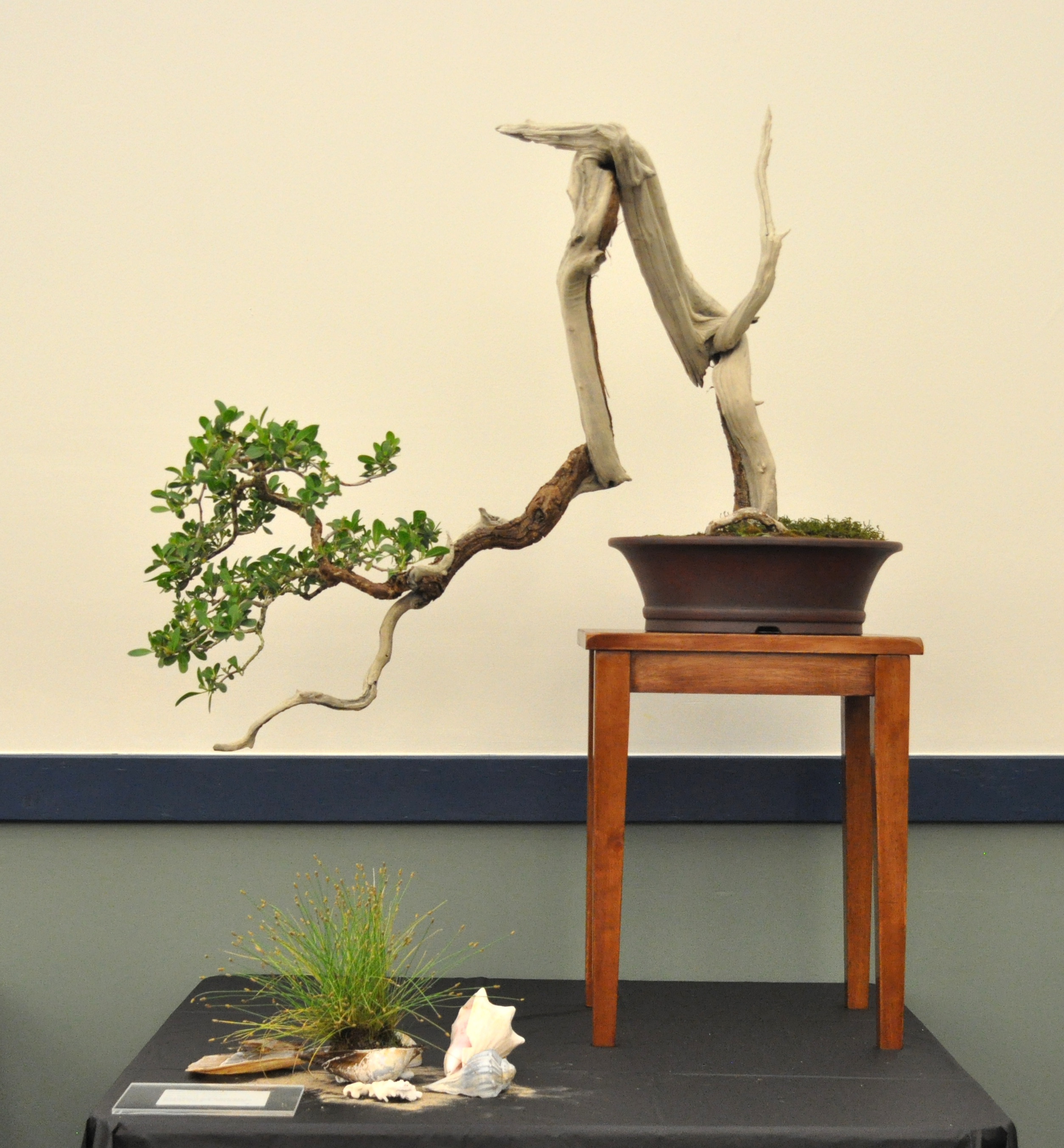Excellence In Bonsai The Lone Star Bonsai Federation