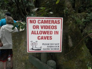 please don't photograph the glow-worms