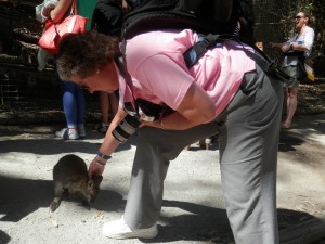 Judy REALLY, REALLY wanted to take this baby wallaby home