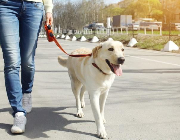 The Fine Art Of Dog Walking   Lone Tree Veterinary Medical Center