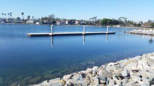 Eel grass mitigation site