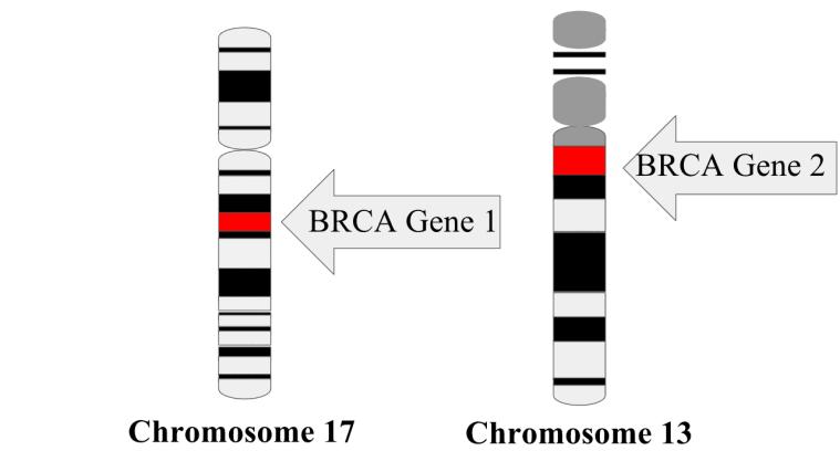 BRCA gene mutation longevity