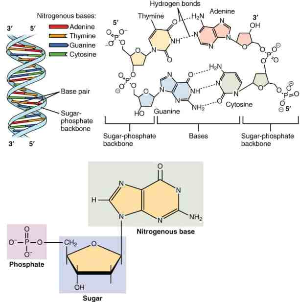 genetic testing benefits nucleotides