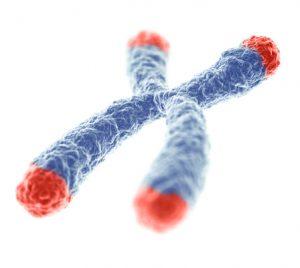 Telomere_vieillissement_3