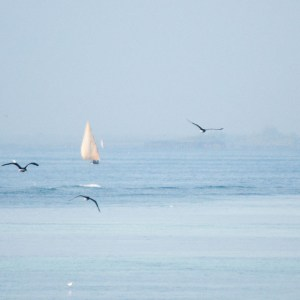 Sailboat and birds on the ocean