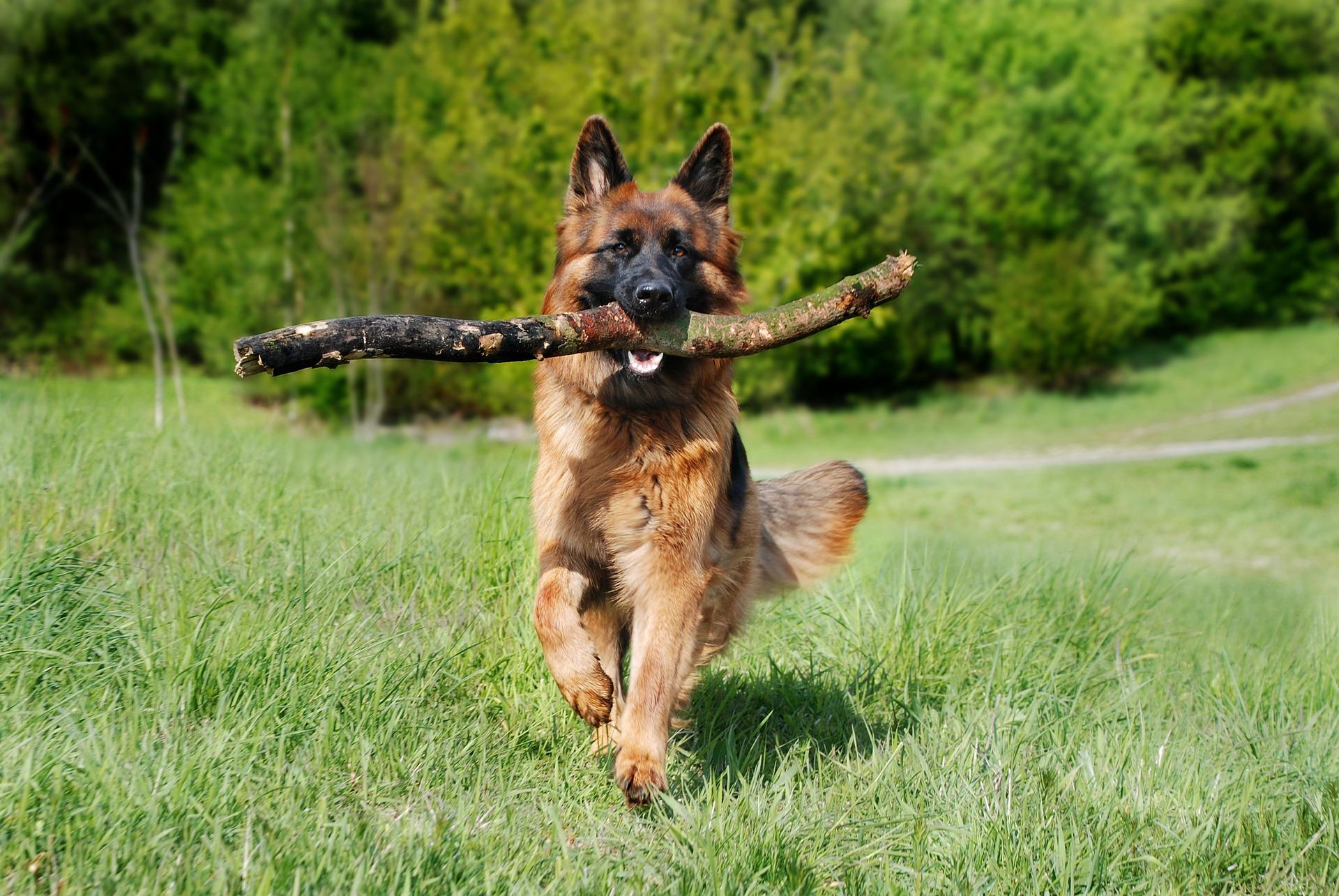 YARRAH koer