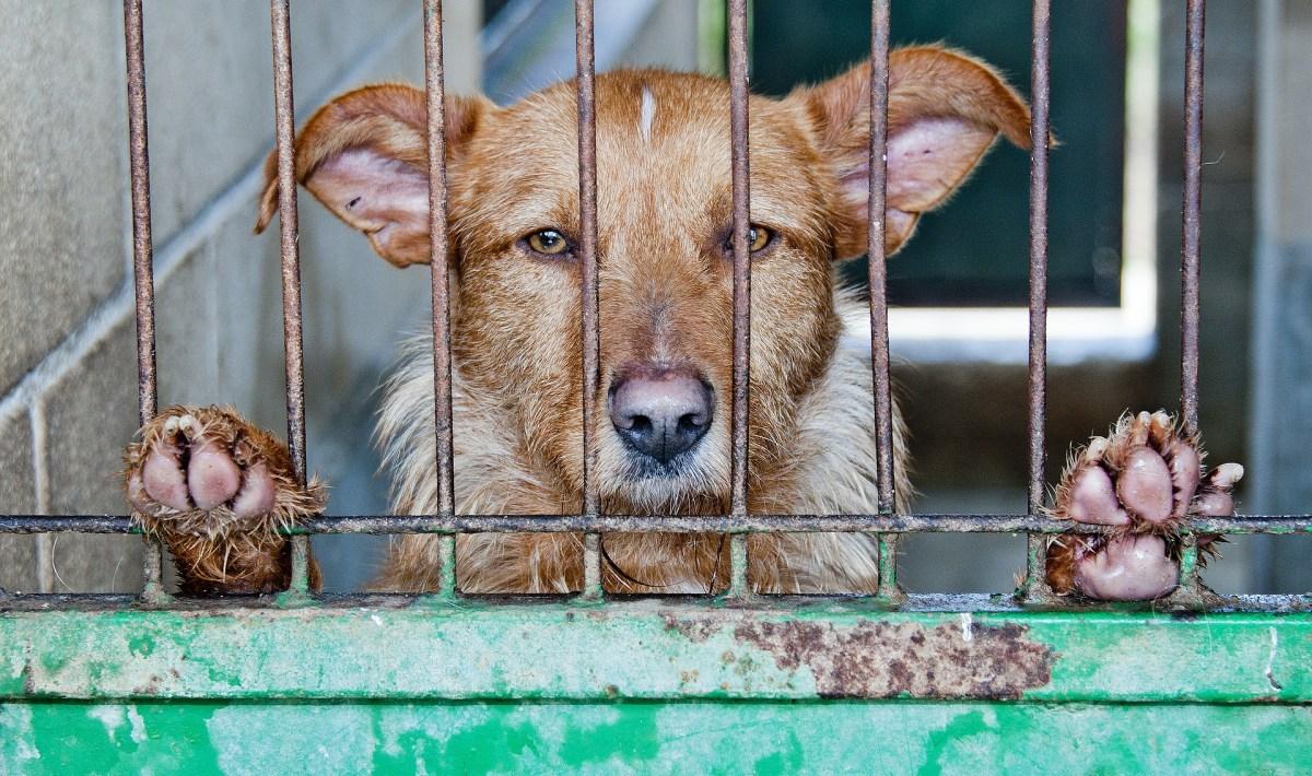 koer varjupaigas